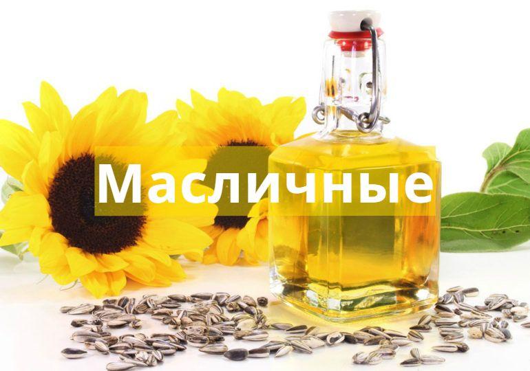 Еженедельный обзор рынка масличных от 24 февраля
