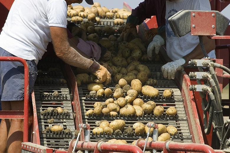 Росагролизинг заключил соглашение с «Союзом участников рынка картофеля и овощей»